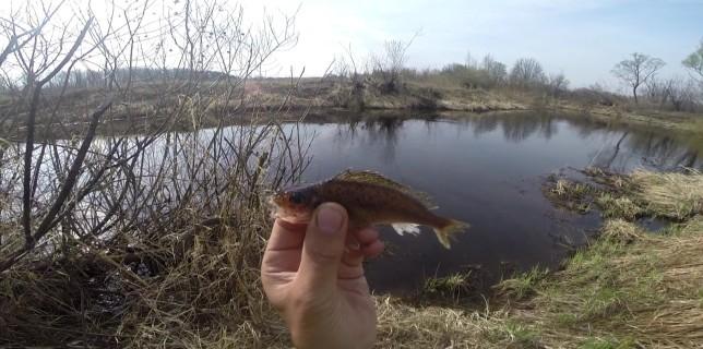 приманка для рыбы фиш хангри