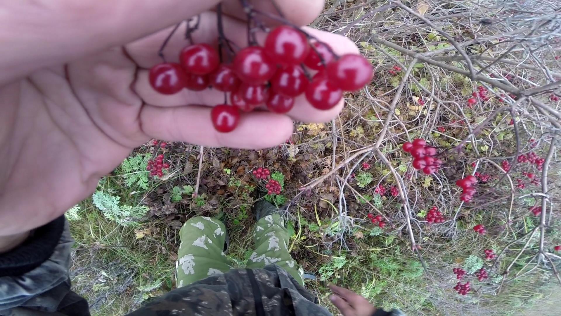 Нерестовый запрет 2018 в Ростовской области Все о рыбалке