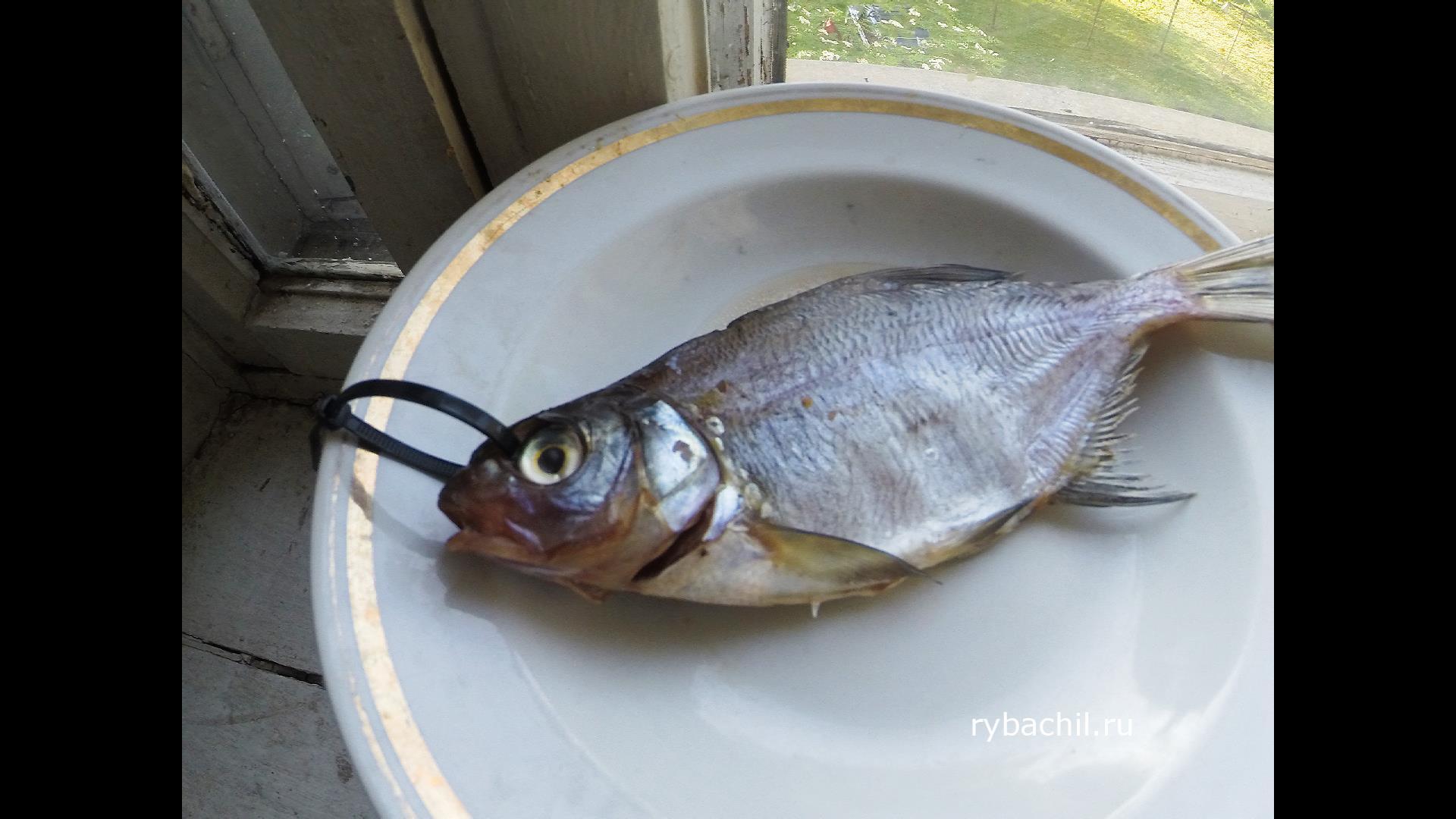 Как вялить рыбу в домашних условиях: технология 90