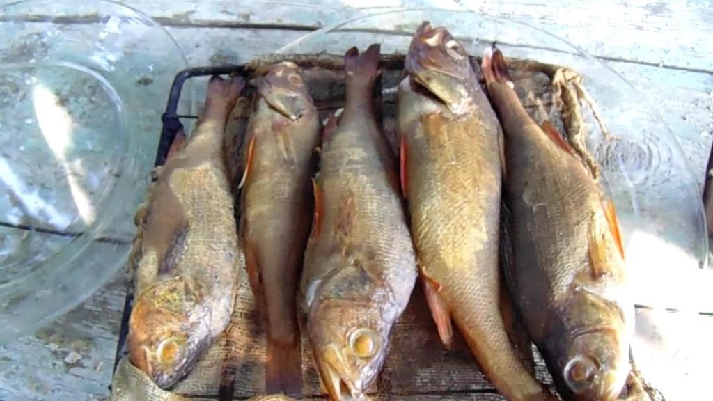 Копчение рыбы  в коптильне,видео