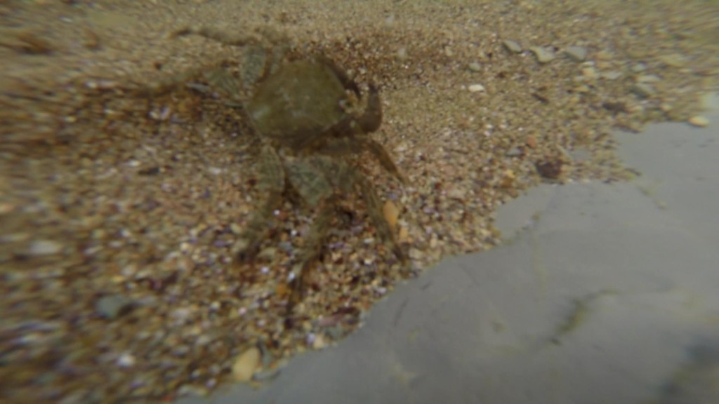 Фото краб на песке.