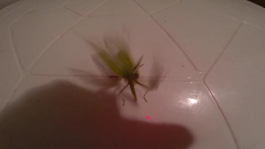 богомол насекомое  в прыжке фото