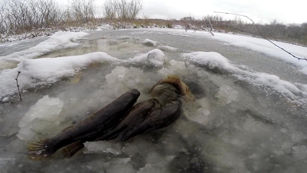 И зимой его продолжают ловить множество рыбаков.