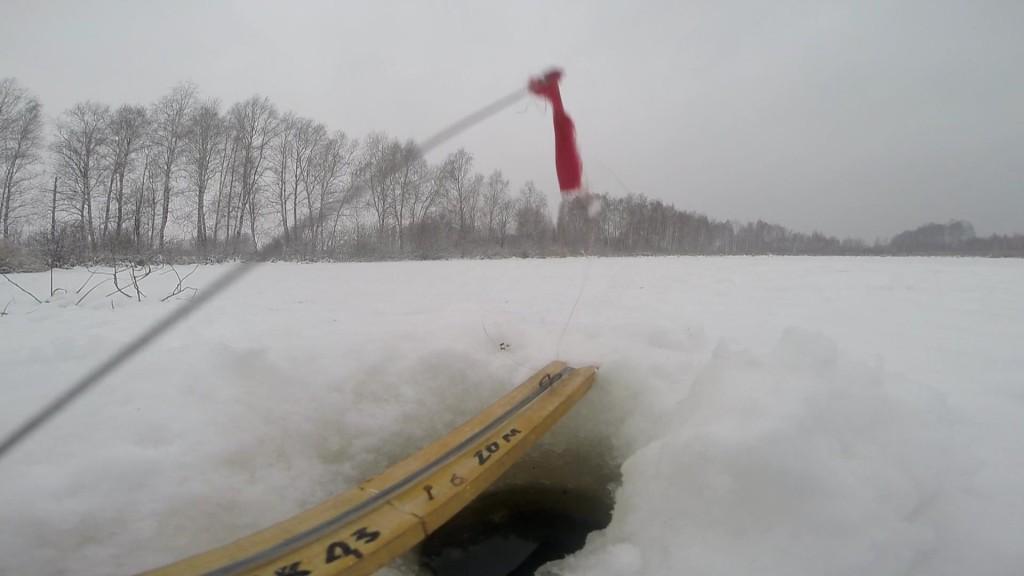 наживка на судака зимой своими руками